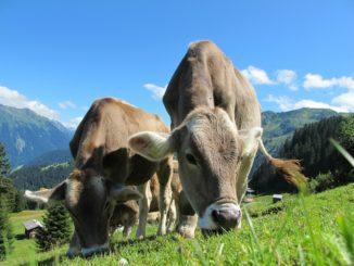 Österreich – immer eine Reise wert